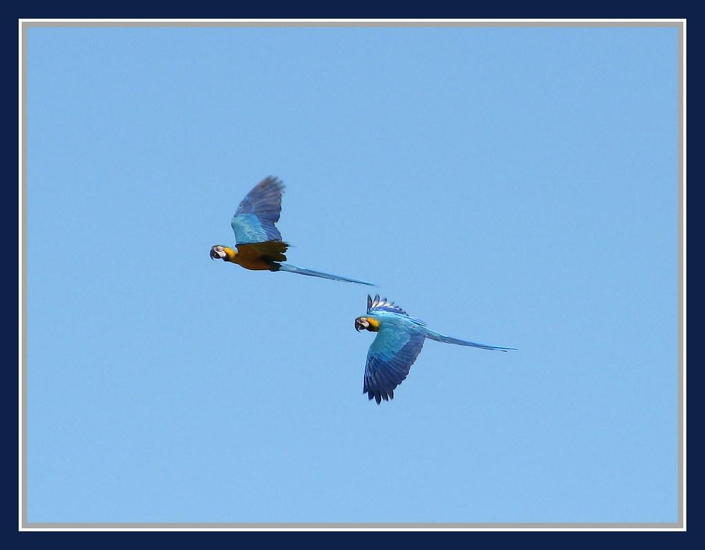 The world 39 s best photos of bestcapturesaoi and oiseau for Oiseau france