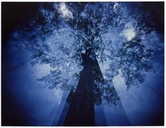 pola color tree085 (openworkstudio) Tags: trees polaroid james fuji c pinhole multiple 100 cathcart exposures theopenworkstudio