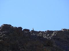 Ibex (jayselley) Tags: park three nationalpark asia desert september mongolia national beauties gobi exodus 2010 mongol gurvan yolynam vulturesmouth gurvansaikhan threebeauties saikhan mongolianadventure