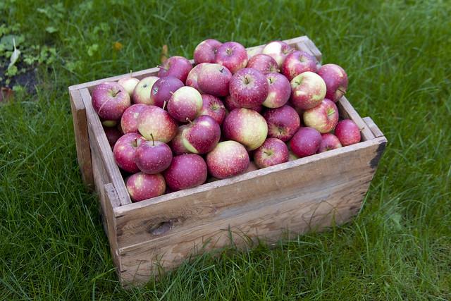 Äpplen i trälåda