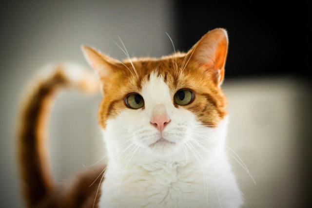 cute rescued ginger cat cross eye