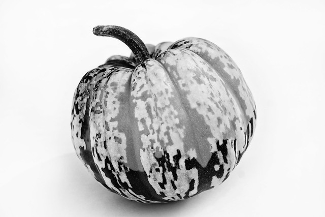 Spotted Squash