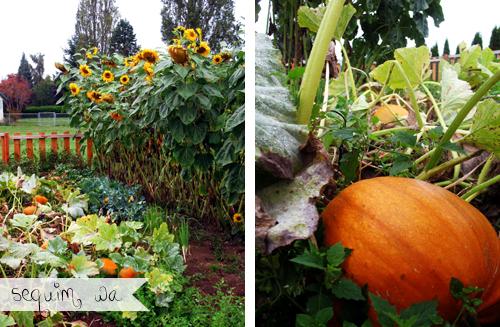 Mom's Fall Garden