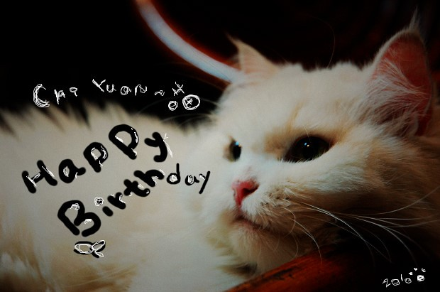 [叮叮]Cat。2010 Happy Birthday