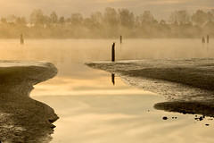 Pitt River Morning 2 (showbizinbc) Tags: mist fog sunrise river golden britishcolumbia mapleridge portcoquitlam pittriver pittmeadows mistymorning platinumheartaward