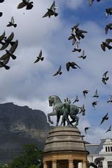 Birds flocking over Cape Town