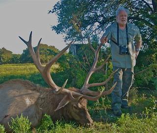 Elk 368