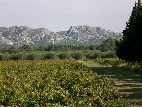 Provence winery