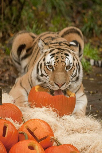 Oregon Zoo: Family-Friendly Portland Halloween Events @ Oregon Zoo