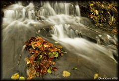 Leaves... (Rally_Captures) Tags: red green water leaves canon river eos waterfall stream lewis falls waterfalls valley 7d brook cascade neath rhodri crynant dulais penpentre afoncreunant