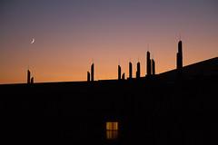 Sunset Savanna @ Animal Kingdom Lodge - Kidani Village (Alan Rappa) Tags: sunset vacation sky moon window orlando florida disney curtains savannah wdw waltdisneyworld 2010 waltdisneyworldresort disneysanimalkingdomlodge kidanivillage