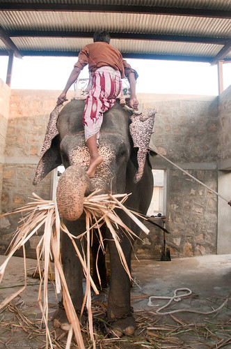 RYALE_Elephant_Village-66