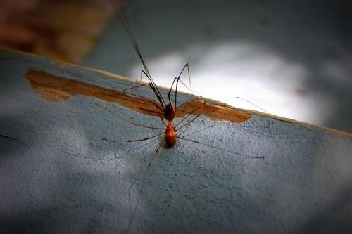 spider(s)