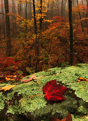 Deep in the Forest... (Brent McGuirt Photography) Tags: park color fall rock fog clouds forest leaf moss autum foggy hike trail national shenandoah