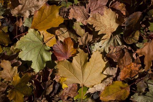 542:1000 Autumn leaves