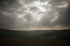 (eyematter) Tags: horses 35mm canon downs sheep 5d eastsussex castlehill southdowns woodingdean f14l