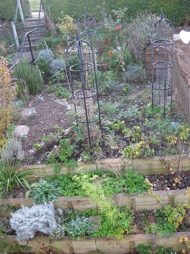 veg bed 1/11/2010