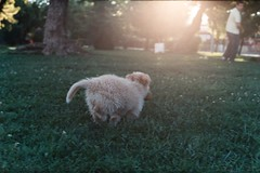 enjoy (whachadoin) Tags: dog naturaleza film analog perro praktica mtl3 200asas parqueohiggins prakticamtl3 pentacon50mm18
