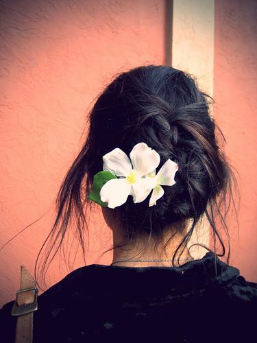 lavender007