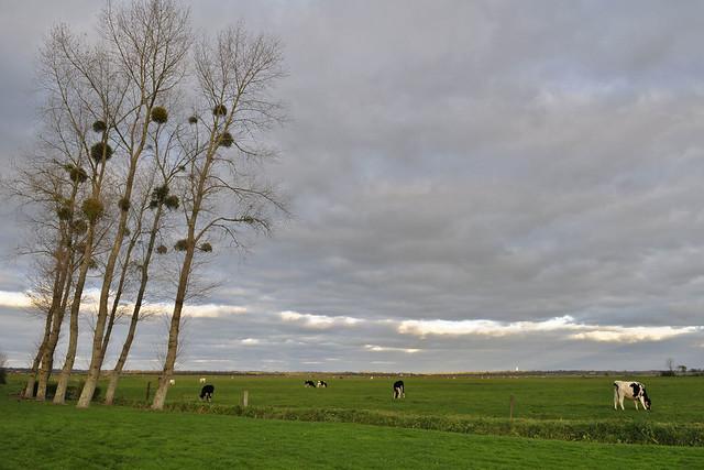 Marais d'Appeville (7068)