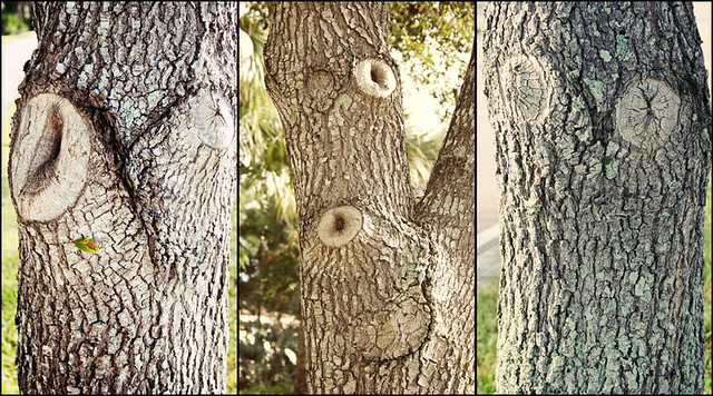 tree faces 2