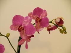Fiori da una amica (lanoo_gr) Tags: flowers light nature garden fiori colori