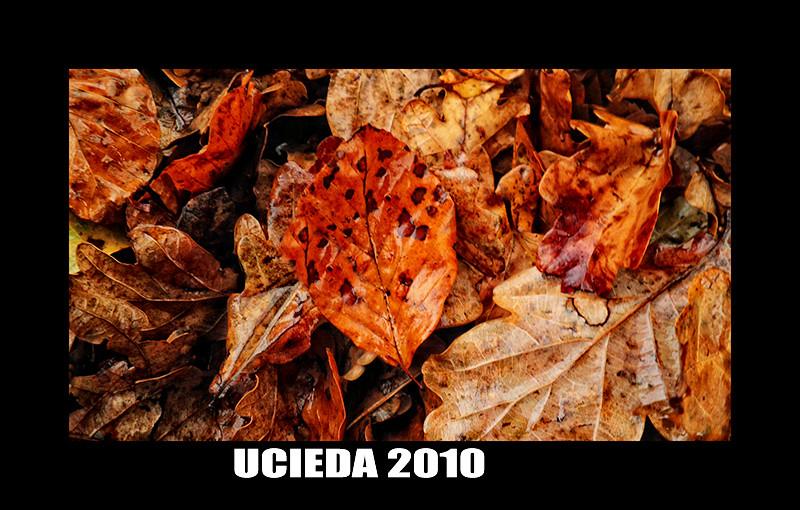HOJAS DE UCIEDA (2010)