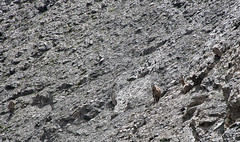 """chamois three • <a style=""""font-size:0.8em;"""" href=""""http://www.flickr.com/photos/30765416@N06/5187302558/"""" target=""""_blank"""">View on Flickr</a>"""