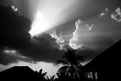 λ (mowunna) Tags: b light shadow bw cloud sun white black silhouette glare bright w palm tropic lux lamda λ
