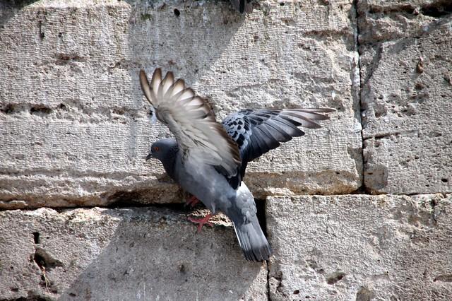 Yeni Caminin Güvercinleri