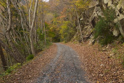 七ツ滝への山道