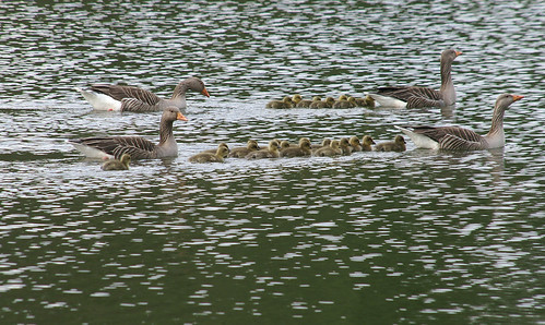 Family Outing - Wimpole Estate, Cambridgeshire