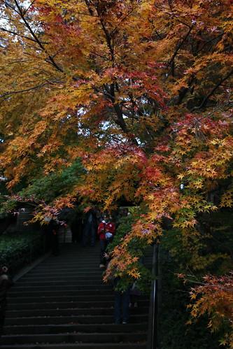 鎌倉2010紅葉