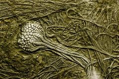 Ancient (-DanielSan-) Tags: macro museum fossil ancient nikon frankfurt d2x micro petrified 105mm senkenberg afd flickraward