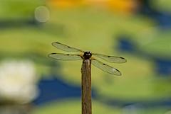 (Chris McLoughlin) Tags: uk england macro nature bug day wildlife yorkshire tamron a300 yorkshirewildlifetrust tamron70mm300mm northcavewetlands sonyalphaa300 chrismcloughlin
