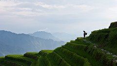 alone amidst the rice terraces (tlynchie) Tags: china sky plants mountain green lady canon eos rice terraces 450d