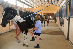 Tacking (Montgomery Area Nontraditional Equestrians (MANE)) Tags: al mane pikeroad
