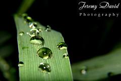 Rain Rain Rain Drops (azarius) Tags: macro water rain drops h2o raindrops waterdrops azarius pinoymacro