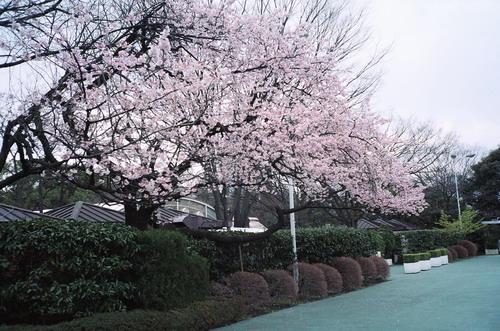 tokyo2009_film_51