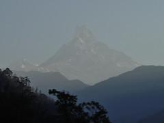 Machhapuchchhre (Fistail Peak) (J Chau) Tags: nepal yak snow sunrise dusk south hill tibet ama kathmandu bazaar poon himalaya yeti khumbu everest pokhara sherpa kala cho annapurna shankar thar kang lukla lhotse nuptse oyu khumjung basecamp thamserku makalu fishtail gokyo beni namche tatopani icefall sirdar chomrong dablam patar tengboche sagarmatha tadapani chomolangma lobuche dhaulagiri pheriche machhapuchhre pumori ghorepani cholatse landrung kangtega ghauri melungtse changtse hiuchuli kyachung taweche
