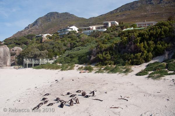RYALE_Cape_Town-150