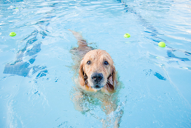 250/365: Doggie Day Swim