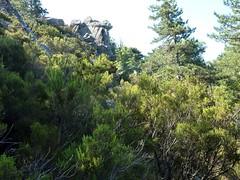 Dans la traversée Bocca Vechigianu - Taculaghja : la trace cairnée et maquisée le long des parois