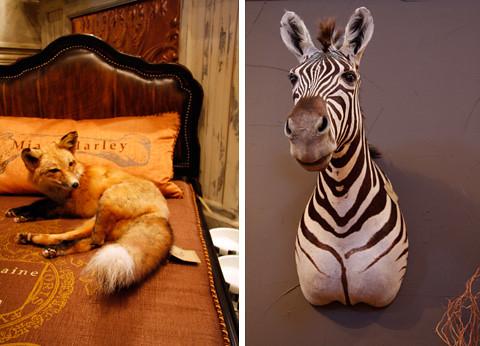 fox, zebra