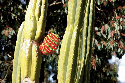 cactus cosy