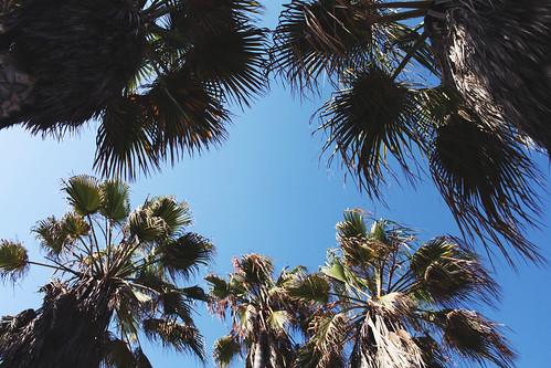 Los Angeles 7