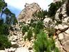 Confluence sous Punta di Bonifacio : branche vers la pointe