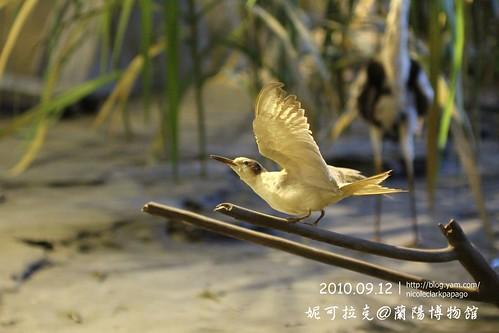 蘭陽博物館20100912-050