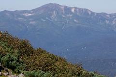 トムラウシ山とナキウサギ