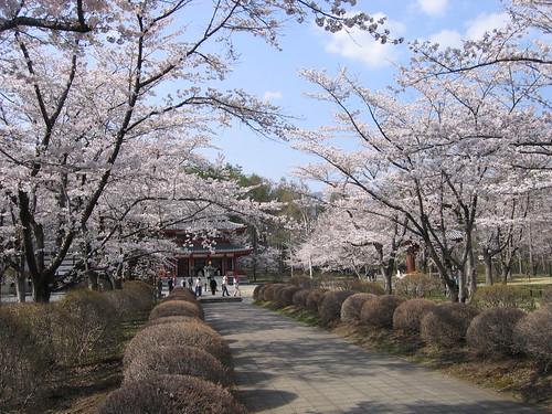 聖光寺正面の桜 08.4.30 by Poran111